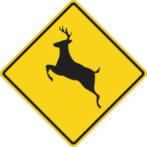How to lower your risk for a deer collision in West Monroe, LA